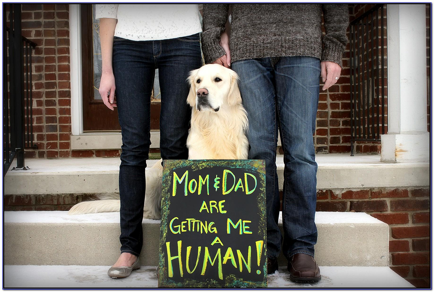 Cute Pet Pregnancy Announcements