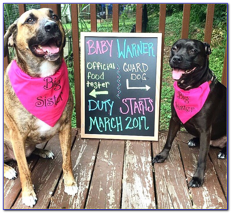 Pet Dog Pregnancy Announcement